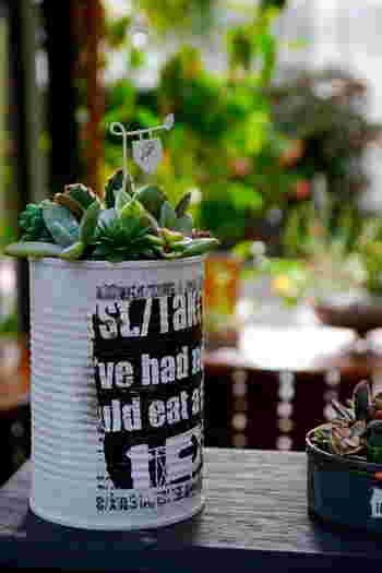 ゴミとなるはずだった空き缶をペイントしてデコって植木鉢としてリユース。地球にやさしいガーデニングの完成です。