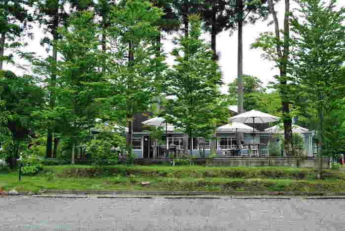 森林のさわやかさを感じる「NASU SHOZO CAFE」。物語性を感じさせるような、たたずまいです。